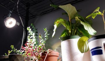 Grow Lights for House Plants